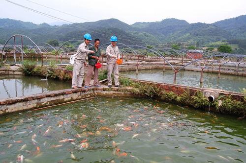 高锰酸钾 水产养殖